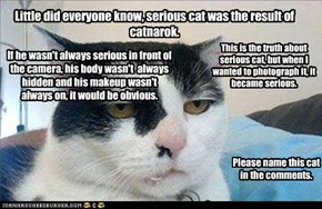 The truth about catnarok and serious cat