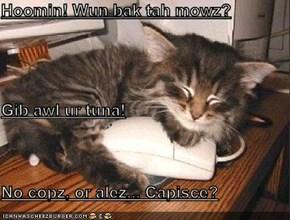Hoomin! Wun bak tah mowz? Gib awl ur tuna!  No copz, or alez... Capisce?