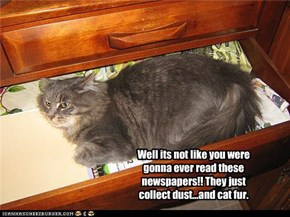 Well its not like you were gonna ever read these newspapers!! They just collect dust...and cat fur.