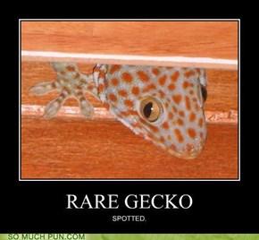 RARE GECKO SPOTTED