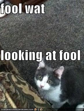 fool wat   looking at fool