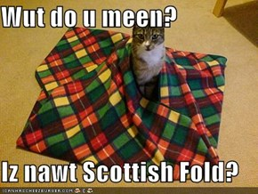 Wut do u meen?  Iz nawt Scottish Fold?