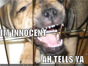 IM INNOCENT AH TELLS YA