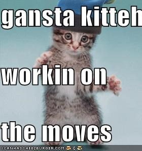 gansta kitteh workin on the moves