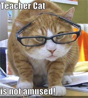 Teacher Cat  is not amused!