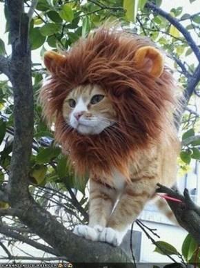 I IS LION rawr!
