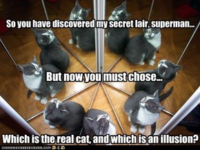 Which is the real cat, and which is an illusion?