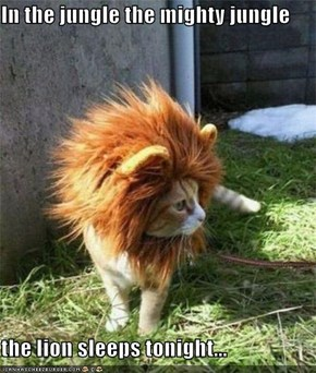 In the jungle the mighty jungle  the lion sleeps tonight...