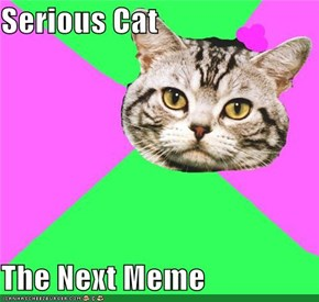 Serious Cat  The Next Meme