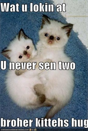Wat u lokin at U never sen two broher kittehs hug!