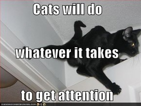 Cats will do whatever it takes to get attention