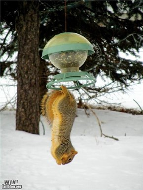 MIssion im...SQUIRREL!