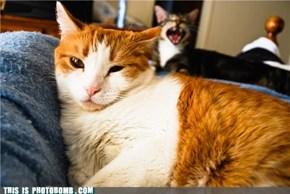 Cat Bombs