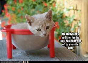 Mr. Fluffybutt's audition for the ICHC calendar was off to a terrific stop.