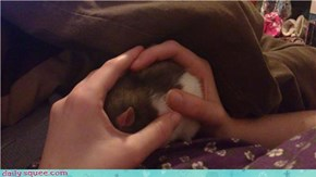 Handful of squee!