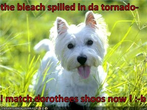 the bleach spilled in da tornado-  i match dorothees shoos now ! :-b
