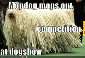 Mopdog mops out competition at dogshow