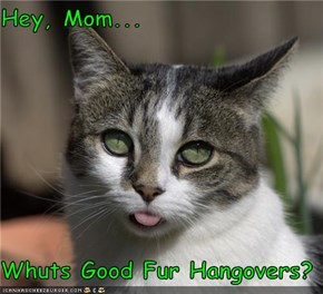 Hey, Mom...  Whuts Good Fur Hangovers?