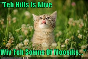 """Teh Hills Is Alive  Wiv Teh Sowns Of Moosiks..."""