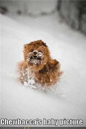 Chewbacca's baby picture