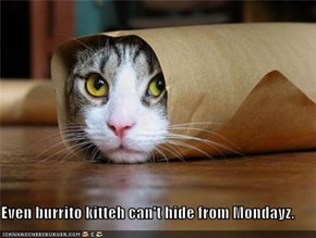 Even burrito kitteh can't hide from Mondayz.