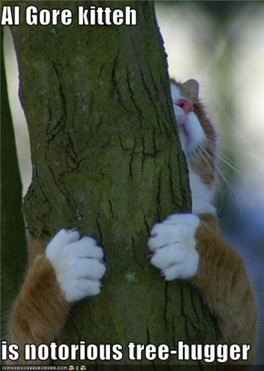 Al Gore kitteh  is notorious tree-hugger