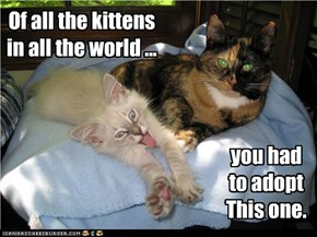 Of all the kittens in all the world ...