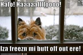 Halo! Haaaaalllloooo!  Iza freezn mi butt off out ere!