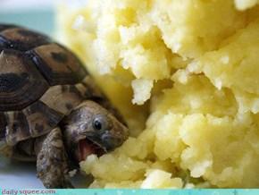 Potato Nommin' Cutie
