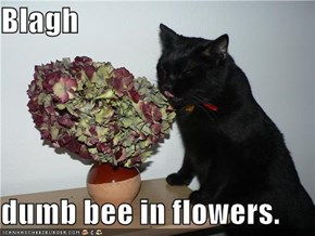 Blagh  dumb bee in flowers.