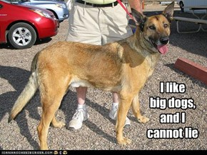 I like  big dogs, and I cannot lie