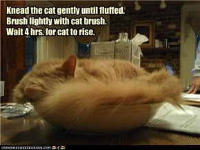 Knead the cat gently until fluffed. Brush lightly with cat brush. Wait 4 hrs. for cat to rise.