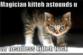Magician kitteh astounds u  w/ headless kitteh trick