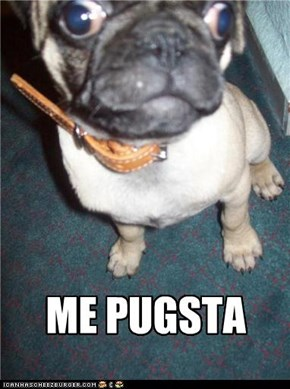 Everybody loves pugs