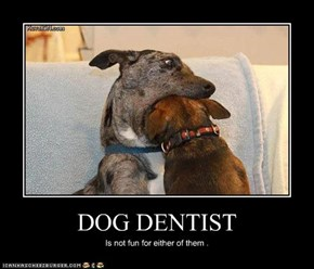 DOG DENTIST