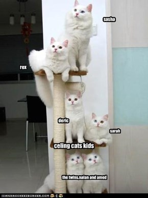 celing cats kids