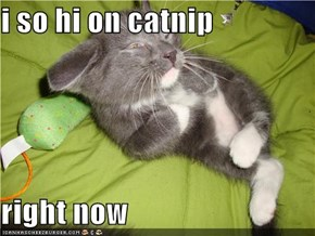 i so hi on catnip   right now