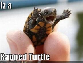 Iz a   Rapped Turtle