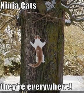 Ninja Cats  they're everywhere!