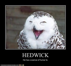 HEDWICK