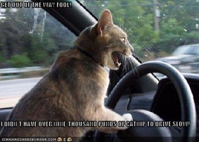 GET OUT OF THE WAY FOOL!  I DIDN'T HAVE OVER NINE-THOUSAND PUNDS OF CATNIP TO DRIVE SLOW!