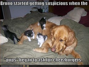 "Bruno started getting suspicious when the   ""pups"" began to ask for cheezburgers."