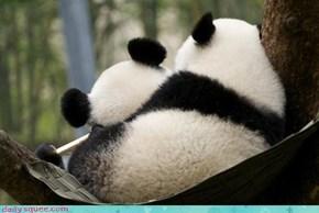 It's a Squee Panda-mic!