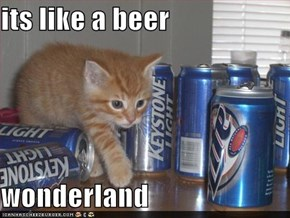 its like a beer  wonderland