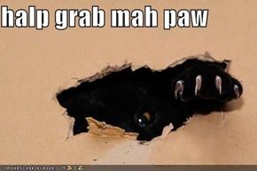 halp grab mah paw