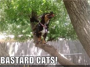 BASTARD CATS!