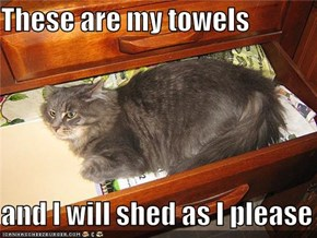 These are my towels  and I will shed as I please