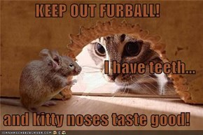 KEEP OUT FURBALL! I have teeth... and kitty noses taste good!
