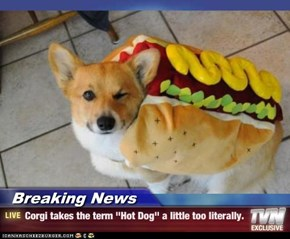 "Breaking News - Corgi takes the term ""Hot Dog"" a little too literally."