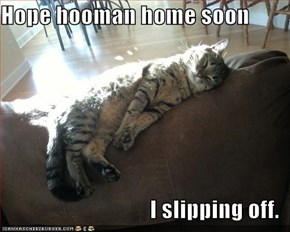 Hope hooman home soon  I slipping off.